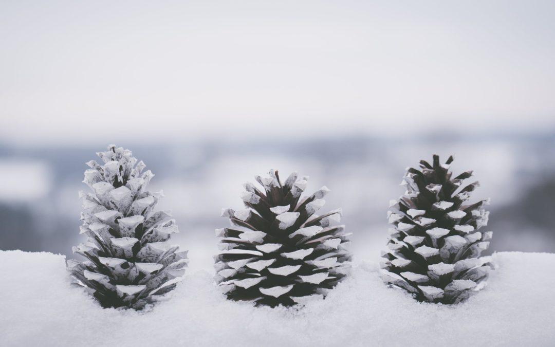 Il neige des nouveautés sur Wetall !
