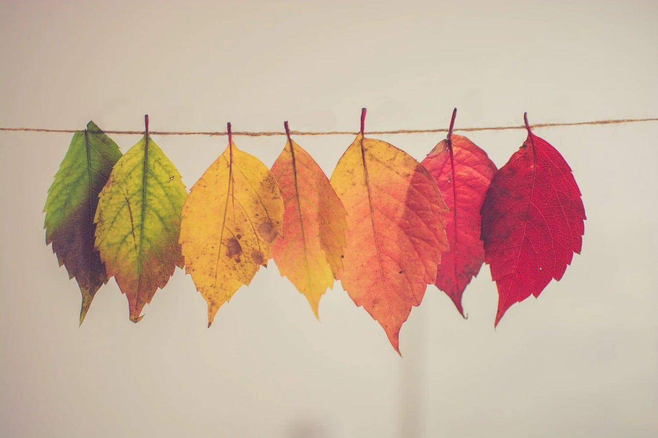 nouveautés automne wetall